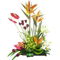 Flowers to India - Anthurium Flowers to India