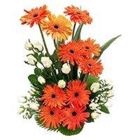 Gerbera Flowers to India
